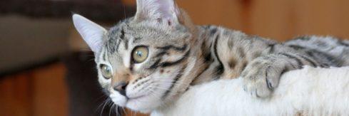 Katzenpension Weidenkätzchen